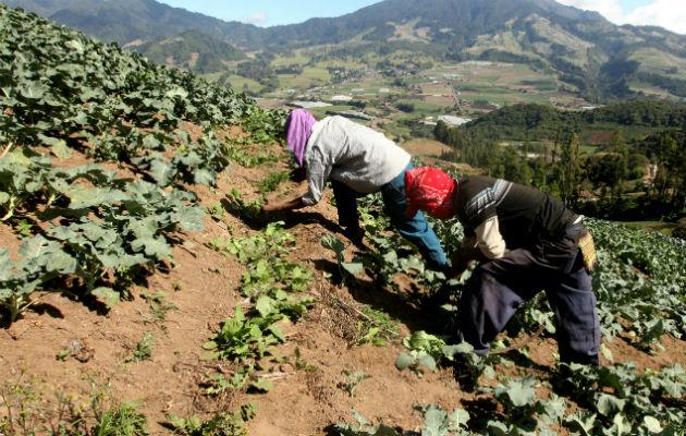 La Cámara de Comercio de Panamá indicó que es necesario establecer una estrategia nacional para el desarrollo del sector agro.