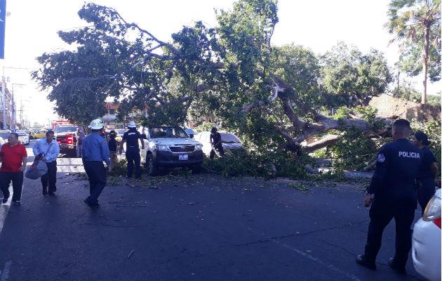 Los bomberos con motosierras retiraron el árbol. Foto: José Vásquez.