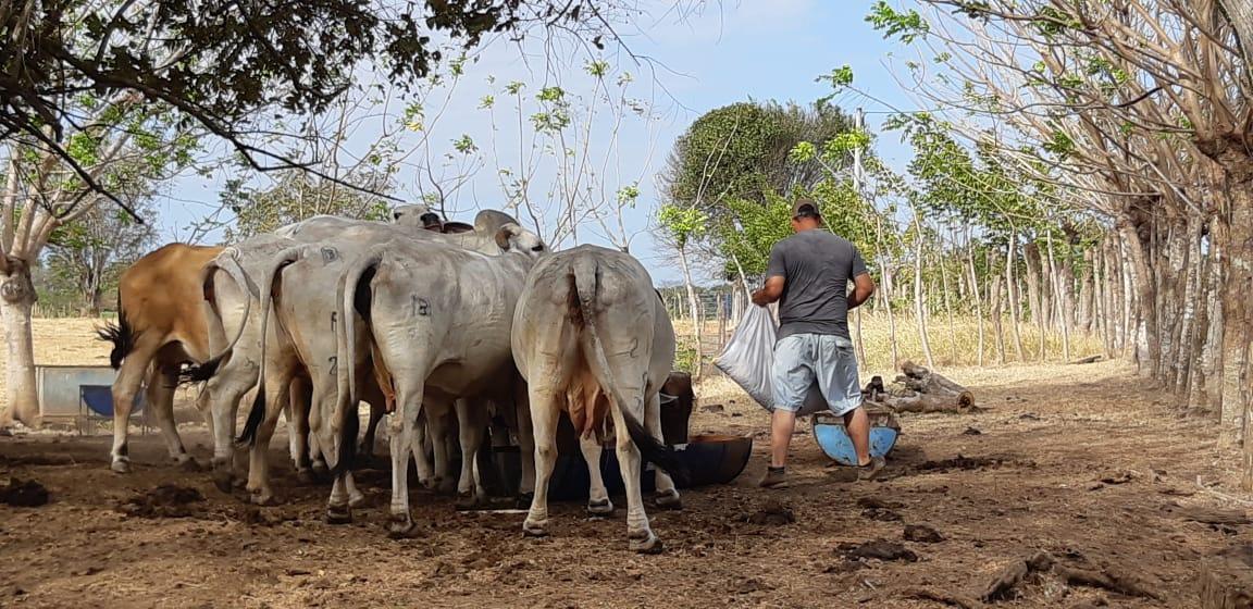 En los primeros cuatro meses del año se denunciaron 42 casos de hurto de animales en fincas de la provincia santeña, Foto/Thays Rodríguez