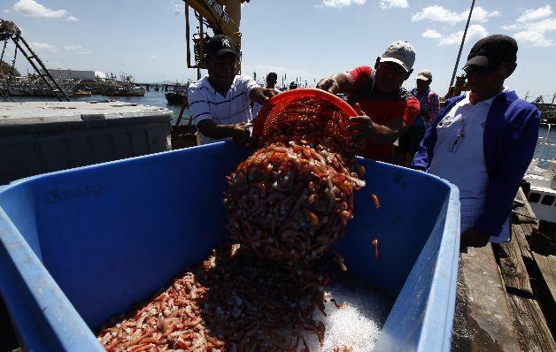 Panamá exporta a EE.UU. camarones, langostinos y otros productos del mar, así como café, piña y desperdicios de aluminio. / Archivos
