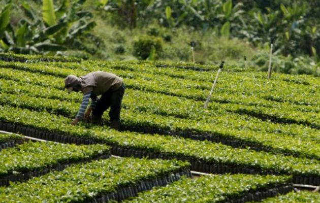Según la FAO, la agricultura digital creará sistemas mucho más productivos y adaptables a los cambios.