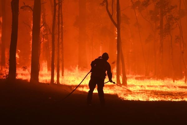 Los incendios forestales azotan a Australia desde el 1 de julio de este año.