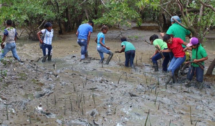 Los estudiantes de la escuela de El Espavé, ubicada en el distrito de Chame, realizan un programa de repoblación de mangle en la zona.