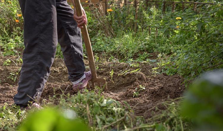 El dispositivo promete hacer más sencilla la jardinería. Pixabay