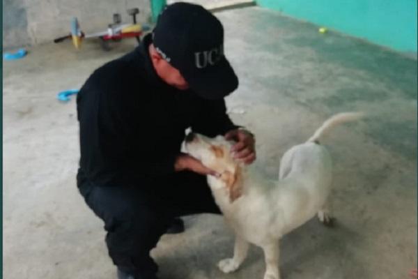 El perro se encuentra estable, según informó la Policía.