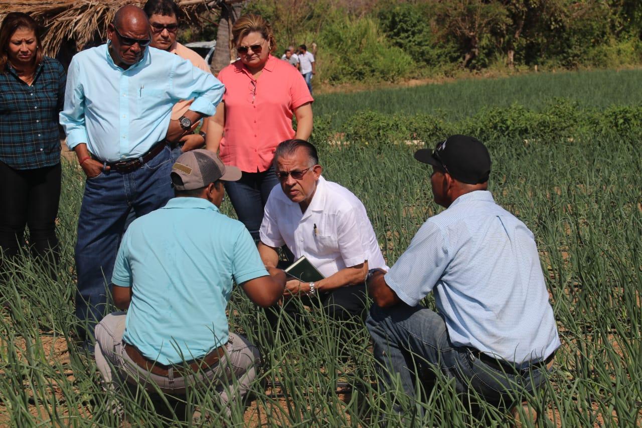 Natá es una de las zonas, a parte de las tierras altas de Chiriquí que produce cebolla.