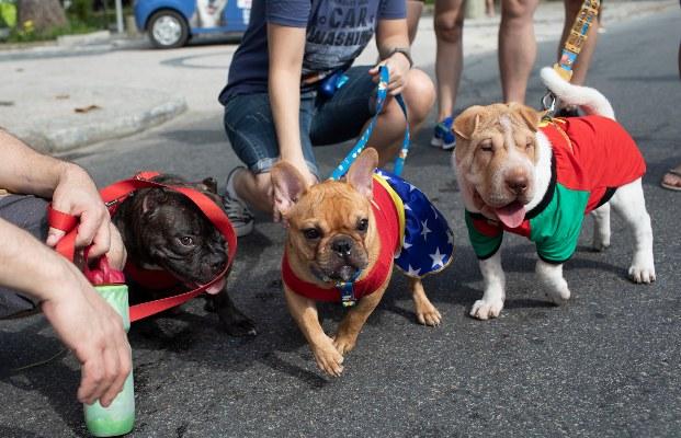 Perros disfrazados participan en el desfile de carnaval de perros