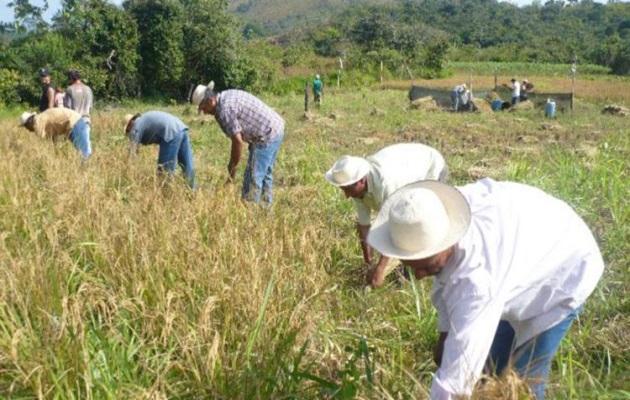 Las importaciones han afectado al sector agropecuario en los últimos años. Foto: Archivo.