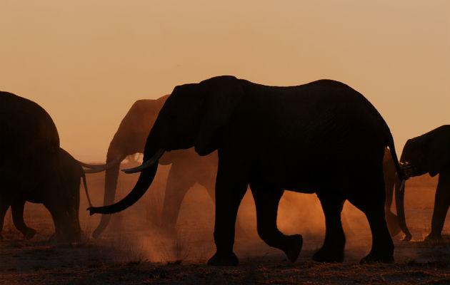 """Unas 130 series sobre naturaleza se transmitieron en el 2019, más que en 2015-2018. """"Elephant Queen"""", de Apple. Foto / Apple."""