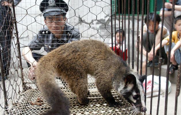 Una civeta, que se sospecha transmitió el virus del SARS a los humanos, en Wuhan, China, en el 2003. Foto / Agence France-Presse — Getty Images.