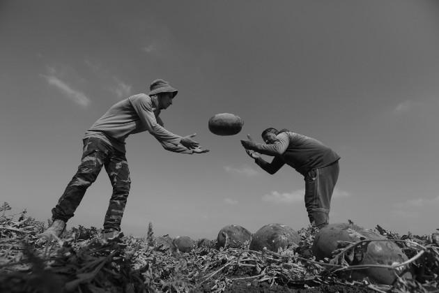 Se necesita fomentar una agricultura con campesinos, una agricultura familiar, pasar del extensionismo y difusionismo y transitar hacia un diálogo de saberes. Foto: EFE.