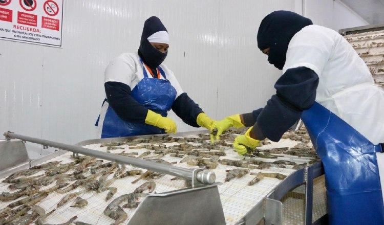 China es el principal destino de las exportaciones de gamba blanca. EFE