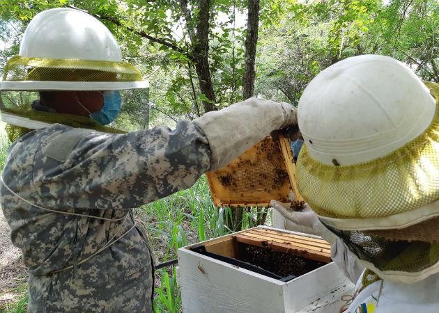 Parte de esta investigación es poder definir qué tipo de abeja predomina en el país. Fotos: Eric A. Montenegro.