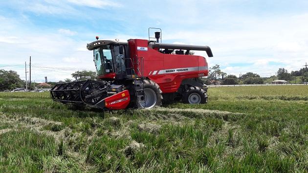 Todos los años surge en medio de la cosecha la incertidumbre por el pago de los $7.50 por quintal de arroz, lo cual puede ser superado con sacar el arroz de la regulación de precio.