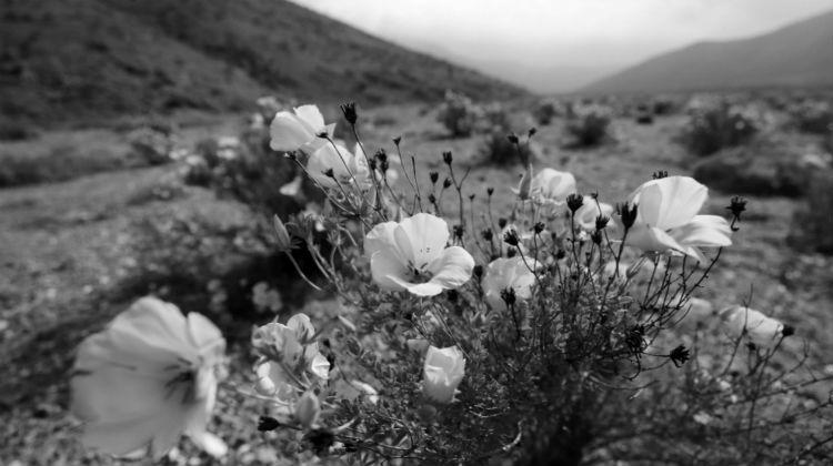 La felicidad se refleja en nuestros sentimientos y ellos son como ese jardín que debe dedicársele tiempo para que las flores estén preciosas. Foto: EFE.