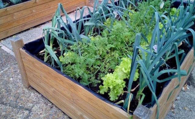 Se puede cultivar en bancales y en poco espacio tener variedades de plantas. Foto: Pixabay