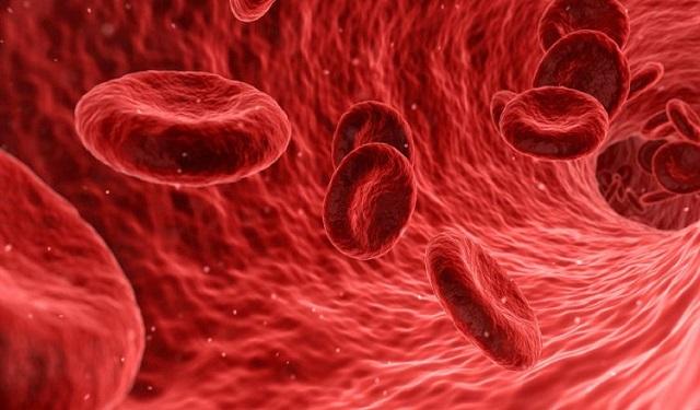 La Leucemia Mieloide Aguda (LMA) es un cáncer de la sangre y la médula ósea de rápida progresión. Foto: Pixabay