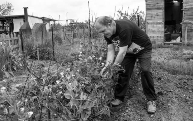 Hay que incentivar a los adultos mayores que se sientan productivos y útiles con estos huertos. Fotos: EFE.