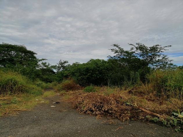 Se prohíbe la quema de basura y herbazales, abandonar automóviles, recipientes en desuso, colchones, y hasta animales muertos en las aceras, calles y lotes baldíos dentro del distrito. FOTO/THAYS DOMÍNGUEZ