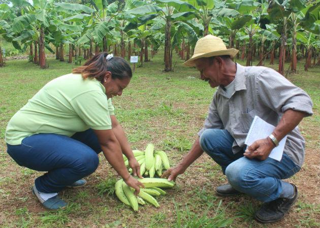 Este tipo de actividades es una inyección a la economía del productor coclesano. Foto: Eric A. Montenegro..