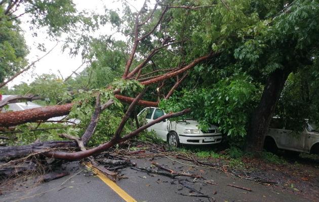 Un árbol cayó sobre un vehículo en La Tiza de Las Tablas. Foto: Thays Domínguez.