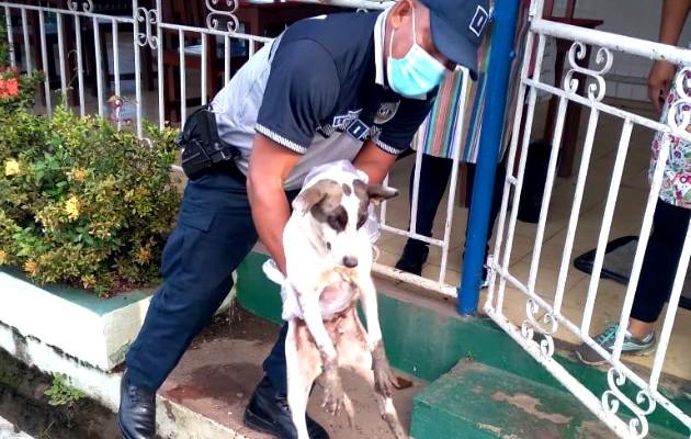 La Dinapart brinda apoyo a rescatista para la movilización de animales rescatados. Foto:Cortesía
