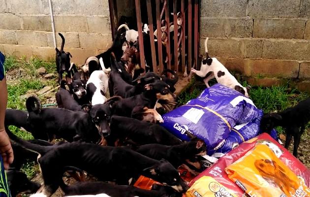 La Fundación MOCA Panamá alberga a unos 60 perros, otros 20 están en hogares temporales. Foto: Cortesía