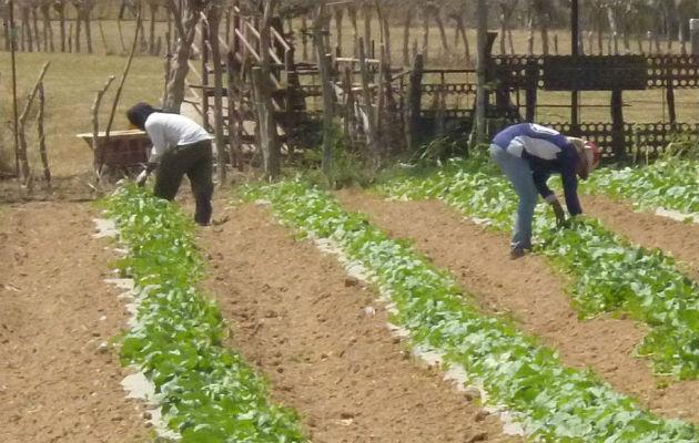 Con este segundo desembolso, un total de 75 agricultores de Chiriquí han recibido el pago.