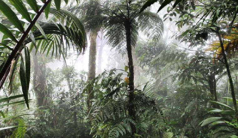 Panamá ha perdido casi el 2% de su cobertura boscosa en siete años (2012-2019), a razón de 8,050 hectáreas por año, según MiAmbiente.