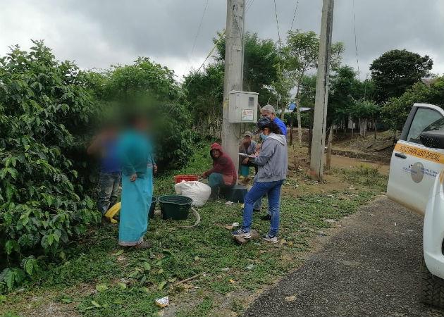 La OIT prohíbe la contratación de menores en fincas agrícolas. Foto: José Vásquez.