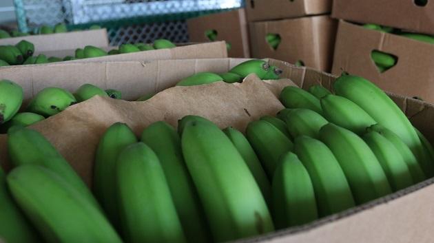 Las exportaciones agropecuarias no se han detenido durante los ocho meses que tiene la economía panameña de estar semiparalizada debido a la crisis sanitaria. Foto/Cortesía