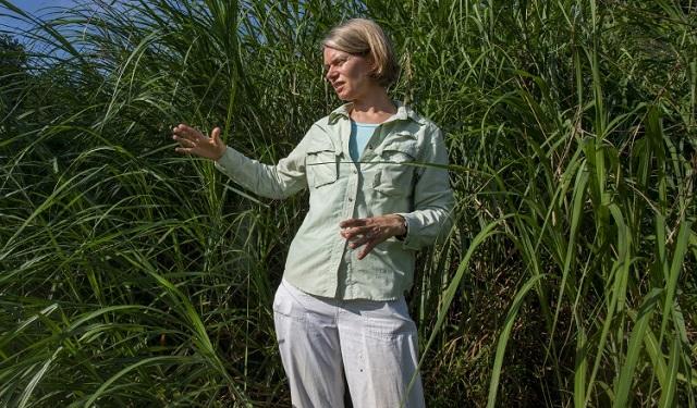 Kristin Saltonstall, científica del STRI. Foto: Sean Mattson