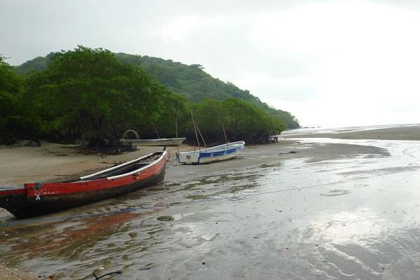 La extracción de mangle para la elaboración del carbón, ha sido por generaciones la principal fuente de empleo para las familias de Espavé, junto a la venta de pescado y almejas.