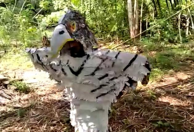Valentín Chacón, quien cursa el tercer grado de la escuela Chorcha Abajo, explicó en video su disfraz de águila harpía.
