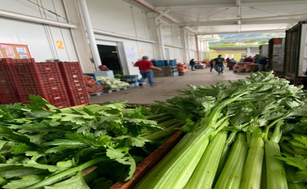 Productos como el apio fueron afectados por el mal tiempo. (Foto cortesía: Merca Panamá)