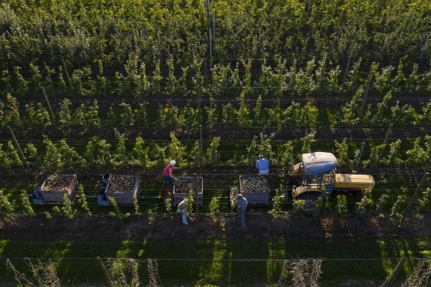 Siete millones de personas trabajan en el sector y producen más de 280 millones de toneladas de alimentos. EFE
