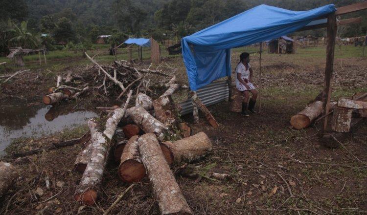 Las pequeñas cabañas hechas de bambú que son construidas por los invasores, son custodiadas en algunos casos hasta con machete en manos. Fotos: Víctor Arosemena