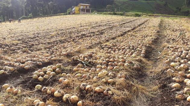El sector agropecuario ha producido en medio de la pandemia. Archivo
