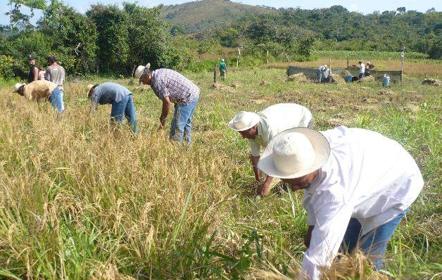 El ministro del Mida, Augusto Valderrana, aseguró que en esta semana se estarán pagando más de $3.5 millones de arroz de la zafra 2020-2021.