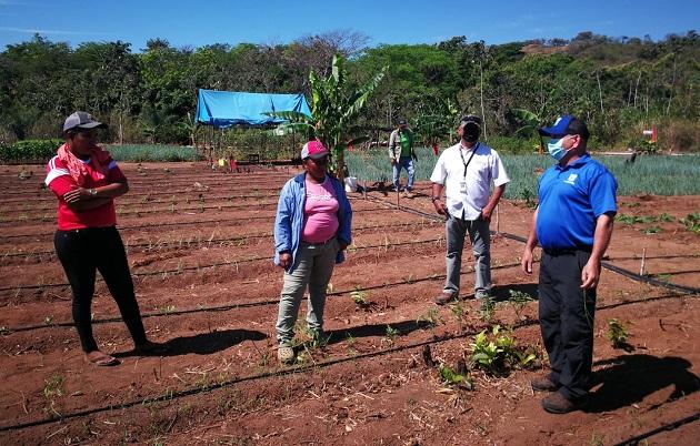 La instalación del sistema de riego por goteo les permitirá a las mujeres en Las Huacas de Natá trabajar la tierra con más seguridad, al contar con agua permanente. Foto cortesía Mides