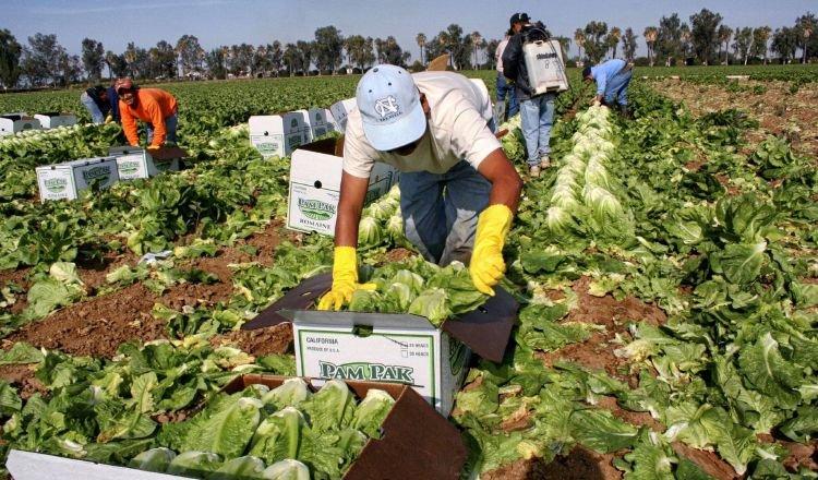 Buscan fortalecer a pequeños emprendedores pecuarios, agrícolas. EFE