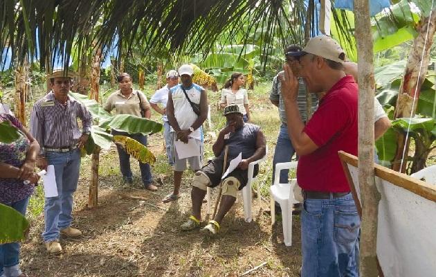 La provincia de Colón cuenta con producción de Coco, plátano, café, ganado bovino ente otros rubros que se producen en menor escala. Foto: Diomedes Sánchez