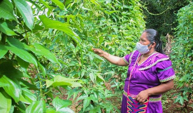 Los conocimientos ancestrales de los indígenas ayuda el manejo sostenible de los bienes naturales. Foto: Cortesía / FAO