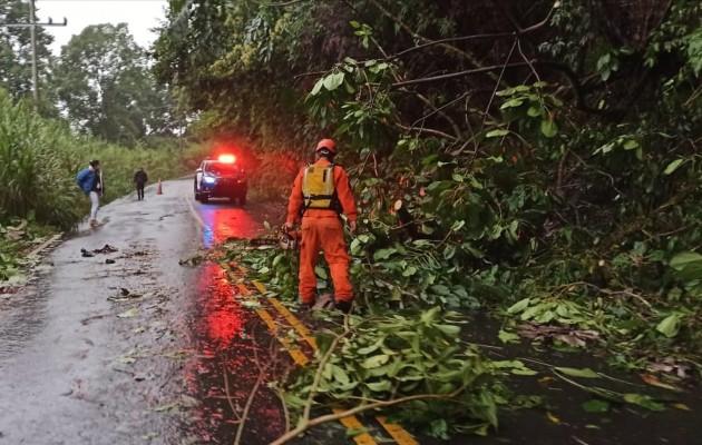 Un árbol quedó en plena vía y fue removido por personal del Sinaproc. Foto: Mayra Madrid