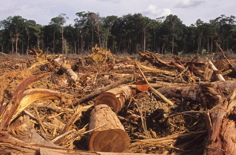 La ganadería es una de las principales causas de la deforestación en Panamá. Foto: Cortesía