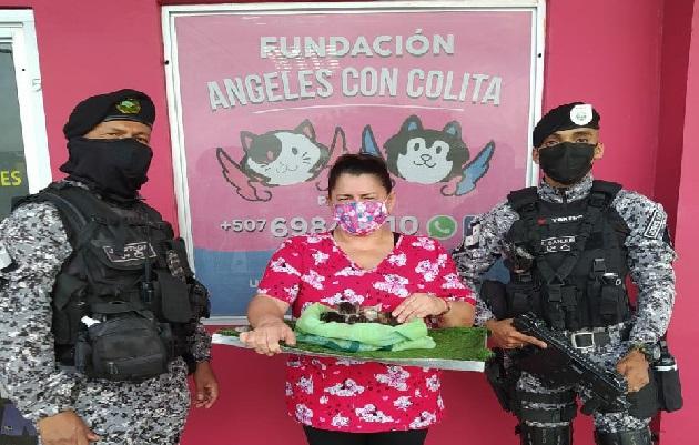 La fundación Ángeles con Colitas se comprometió a buscar a familias que adopten a los gatos. Foto: José Vásquez