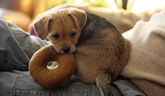 En los primeros tres meses de vida del cachorro se moldeará su personalidad y las conductas que permanecerán el resto de su vida. Foto: Ilustrativa / Pixabay
