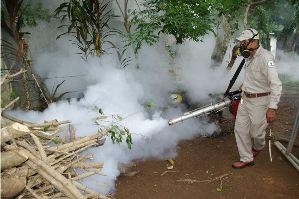 Las nebulizaciones solo eliminan el mosquito adulto.
