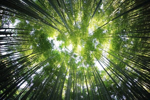 Buscan restaurar 1,000 millones de hectáreas de tierra.