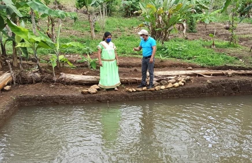 Los estanques tienen una profundidad de 1.50 metros y los alevines se alimentan dos veces al día. Foto: Cortesía/Mides